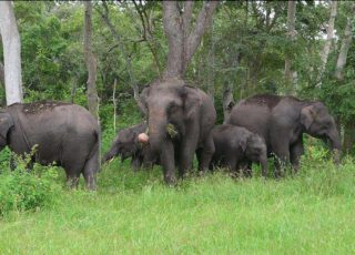 Mudumalai tour package