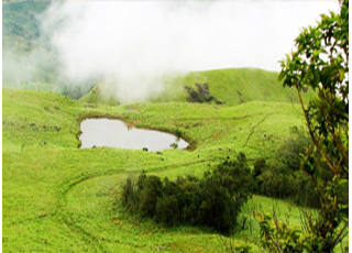 ooty wayanad coorg tour package